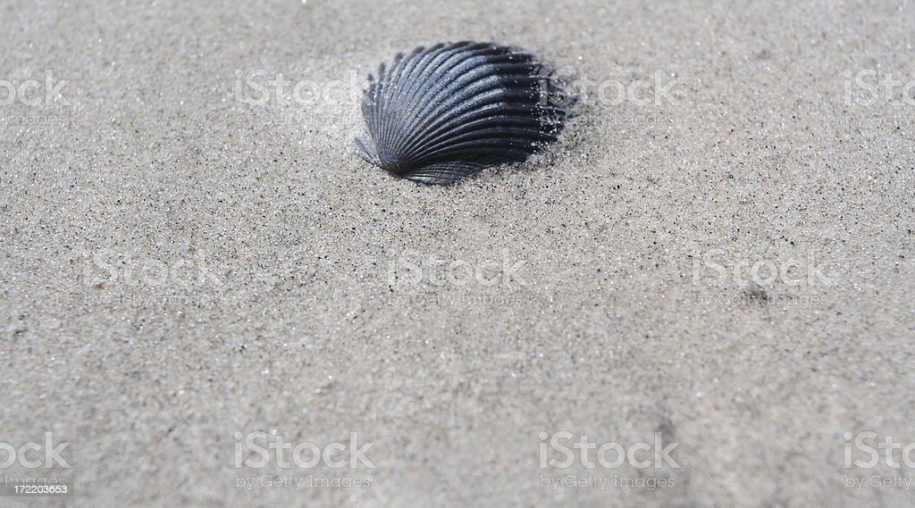 seashell – Foto