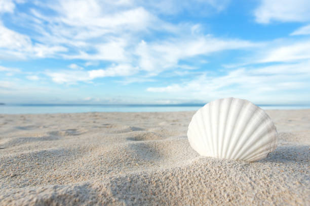seashell - animal shell stock pictures, royalty-free photos & images
