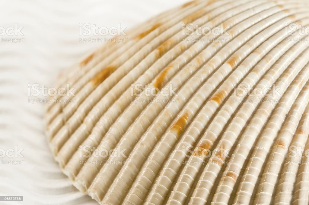 Seashell royalty-free stock photo