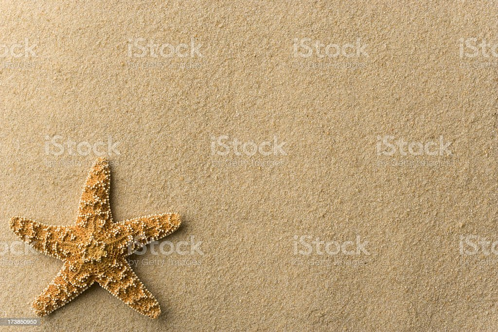 Seashell - Starfish on Beach Background. Horizontal. Full Frame. stock photo
