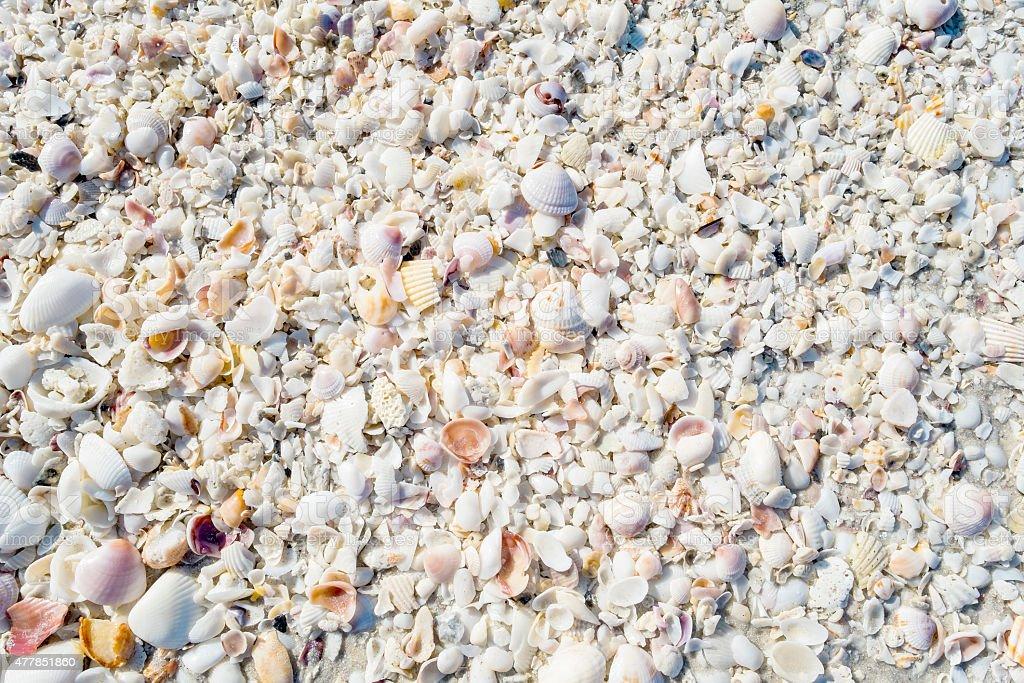 Seashell Texture stock photo