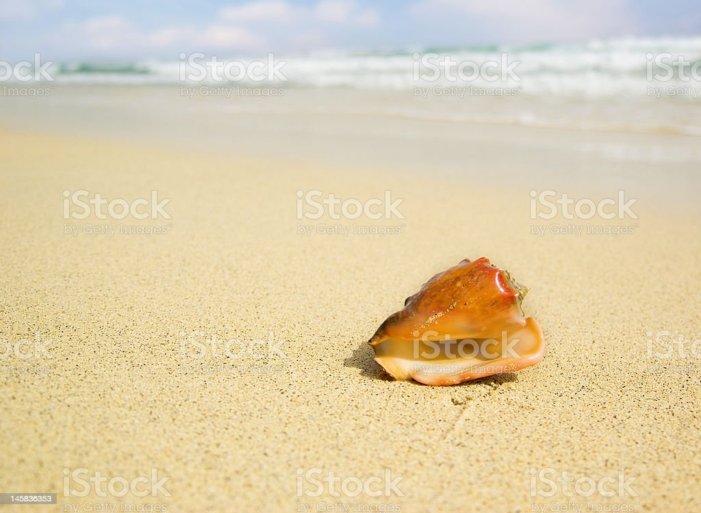 Seashell with blurred background royalty-free stock photo