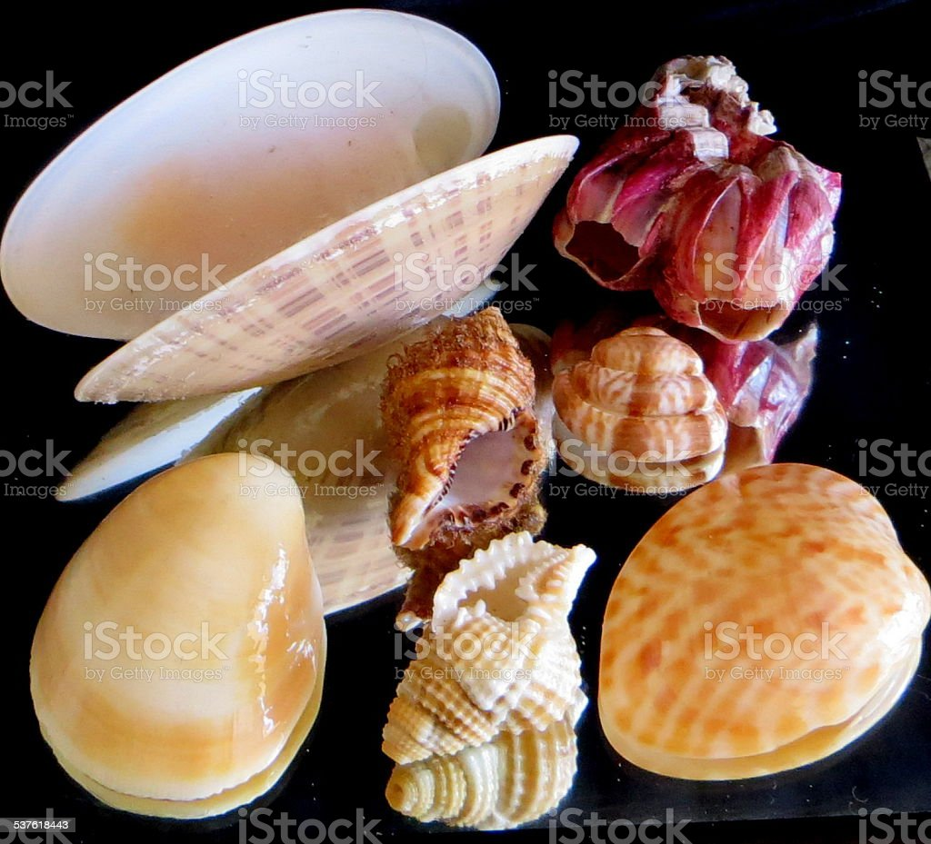 Seashells 7 of 7 stock photo