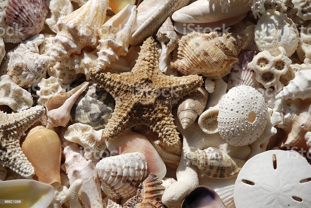 Seashells and Coral royalty-free stock photo