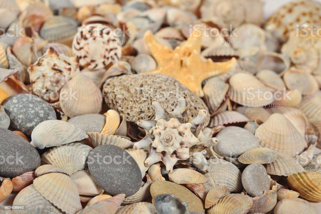 Seashells and pebbles close-up zbiór zdjęć royalty-free