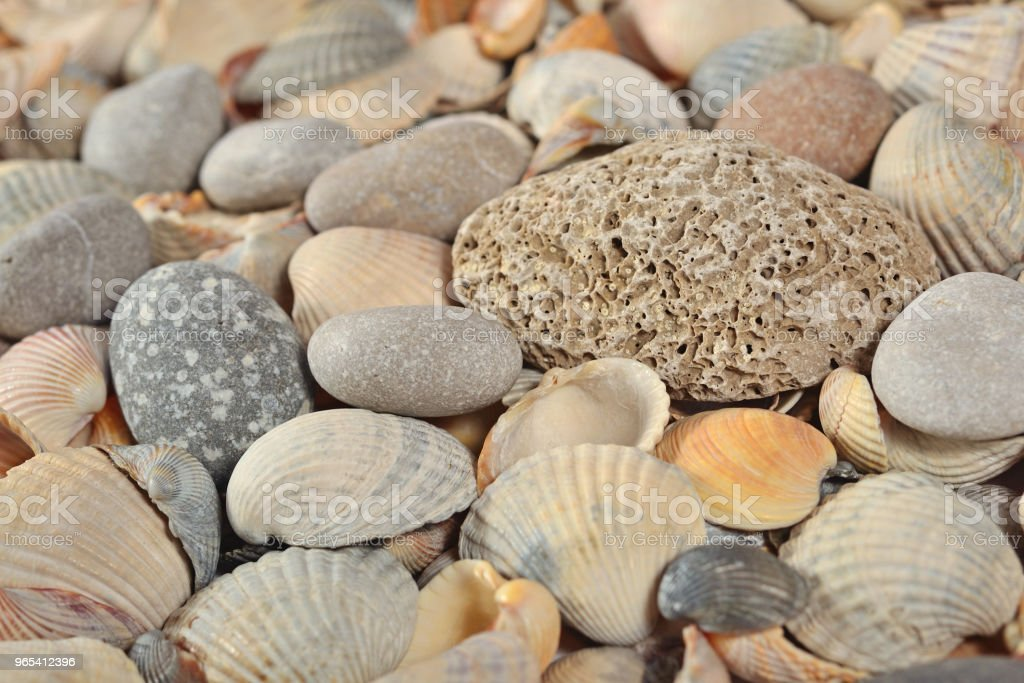 Seashells and pebbles close-up royalty-free stock photo