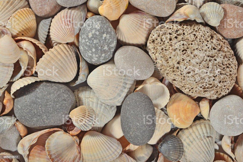 Seashells and pebbles close-up royalty-free stock photo