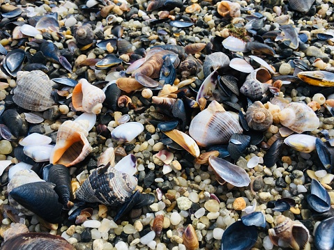 Variety of seashells and small pebbles on a beach.