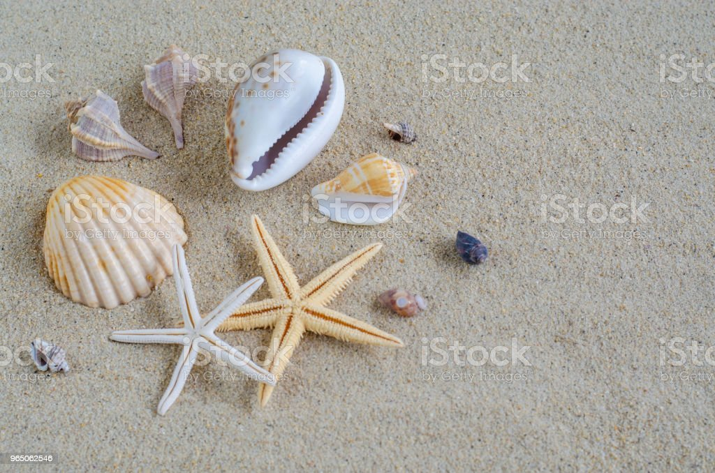 seashells and sand zbiór zdjęć royalty-free