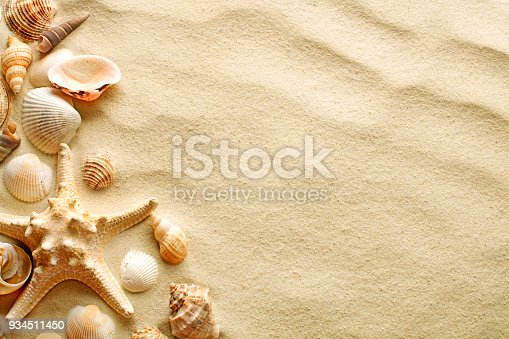 top view of sandy background with dunes, seashells and starfish