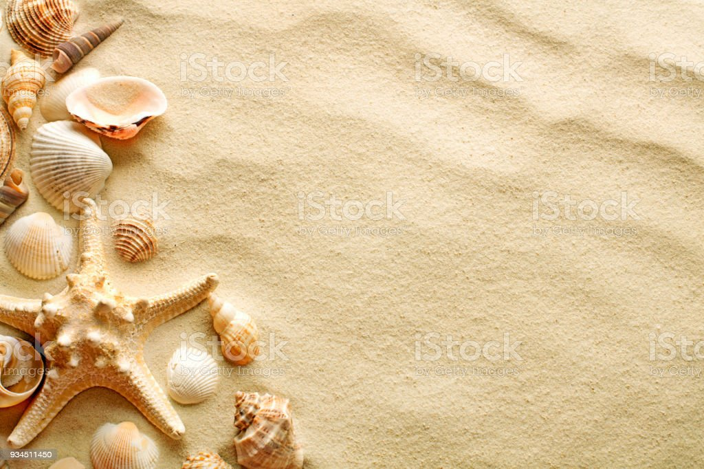Seashells and starfish on sand stock photo