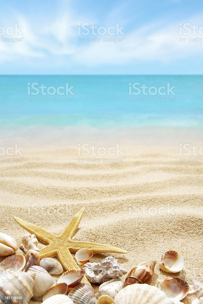 Seashells and starfish on the sands of a beach stok fotoğrafı