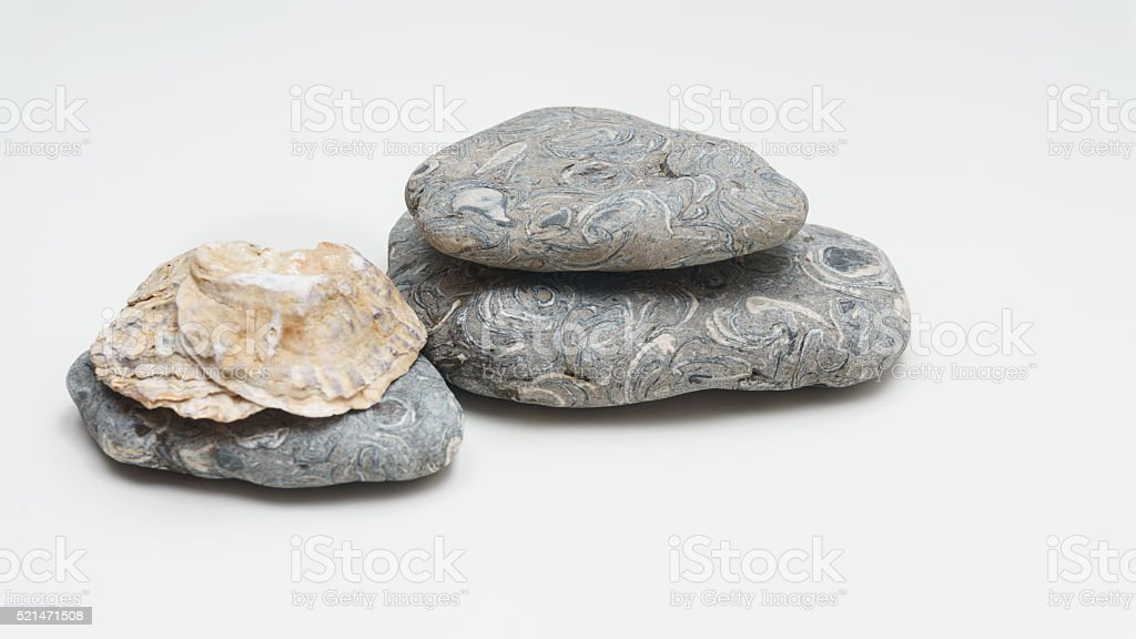 Seashells and stones stock photo