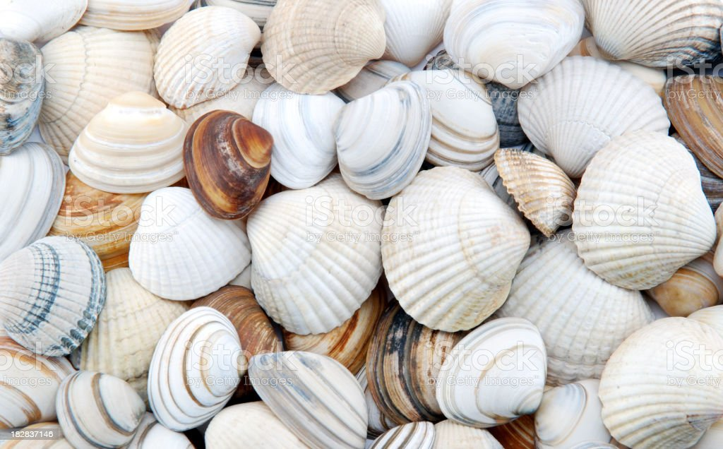 Seashells as background royalty-free stock photo