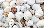 Bunch of seashells on still life. Image can be used as background.You might also be interested in