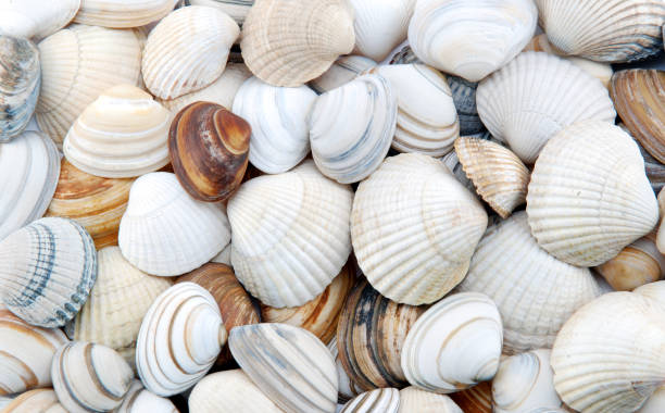 Seashells as background stock photo