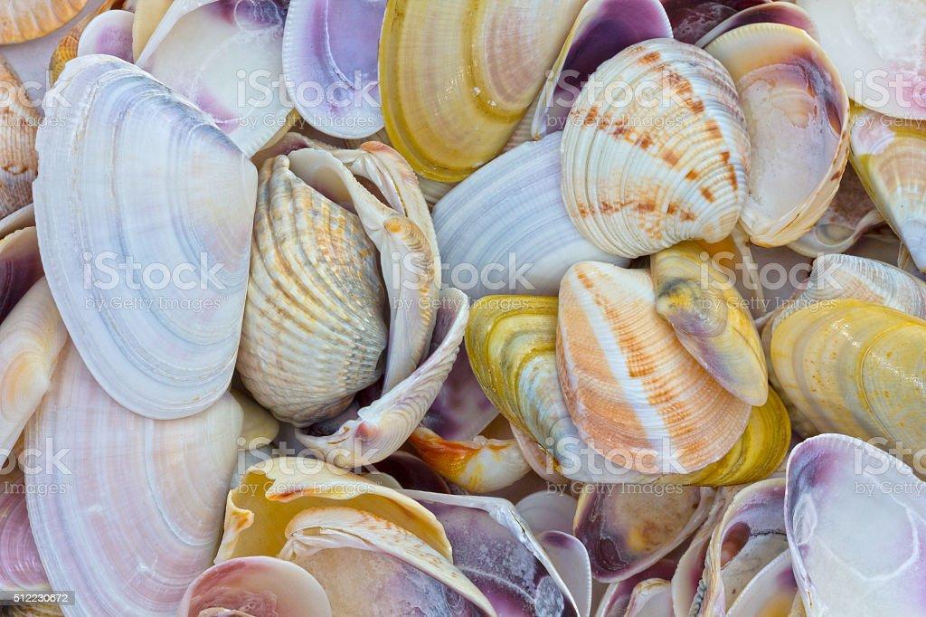 Seashells as background stock photo