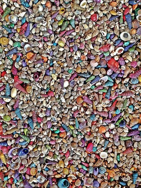 Seashells - Background foto