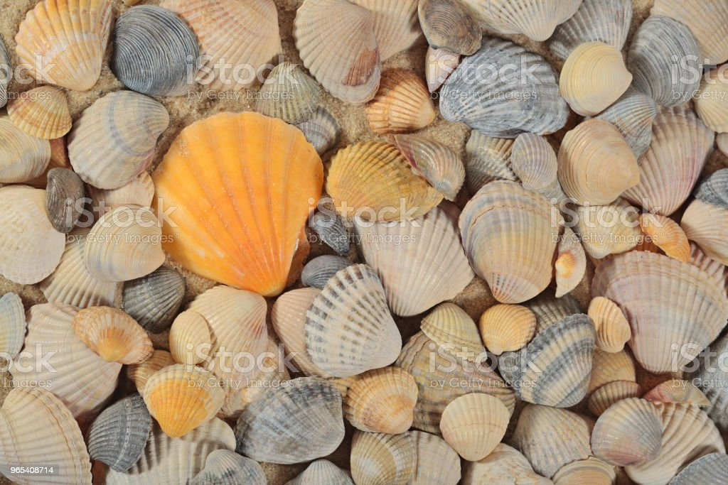 Seashells close-up as background royalty-free stock photo