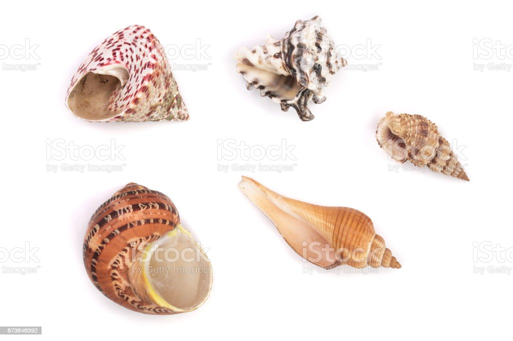 Seashells collection isolated on a white background stock photo