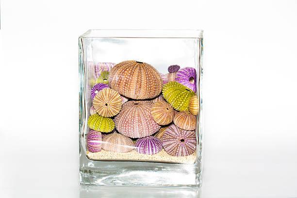 Seashells decoration on white background foto