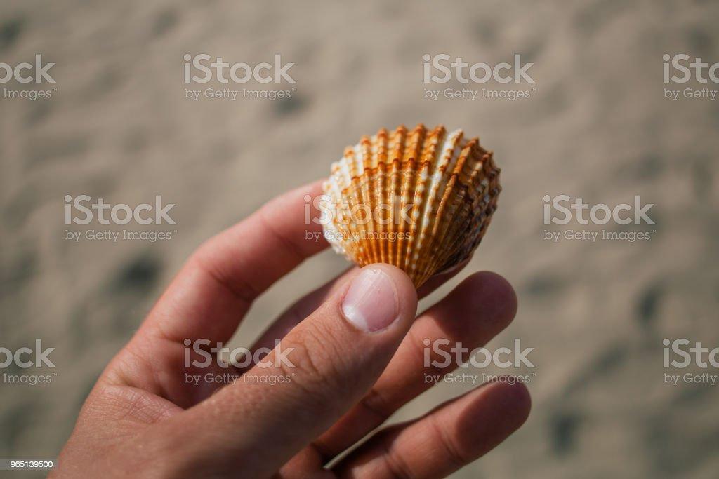 Seashells in the hands, adriatic sea Italia coast apulia royalty-free stock photo