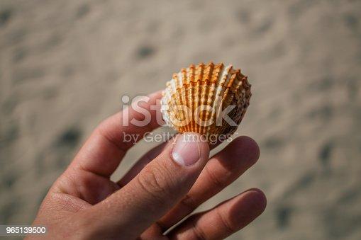 Seashells In The Hands Adriatic Sea Italia Coast Apulia Stock Photo & More Pictures of Adriatic Sea