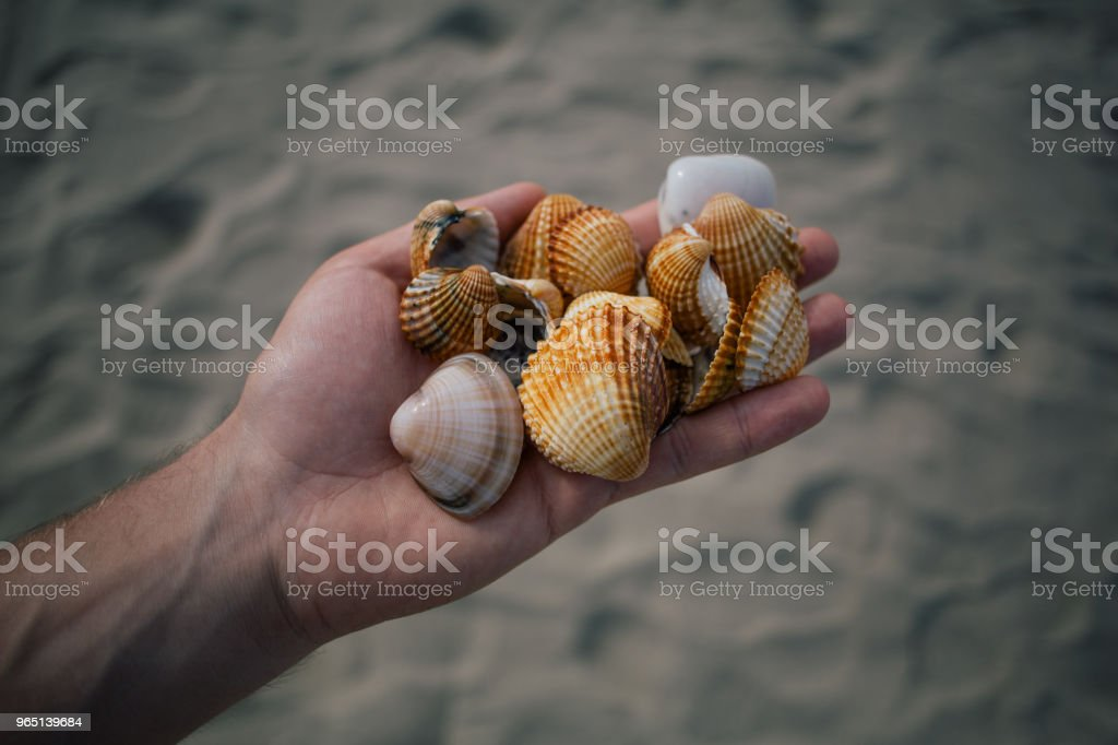 Seashells in the hands, adriatic sea Italia coast apulia zbiór zdjęć royalty-free