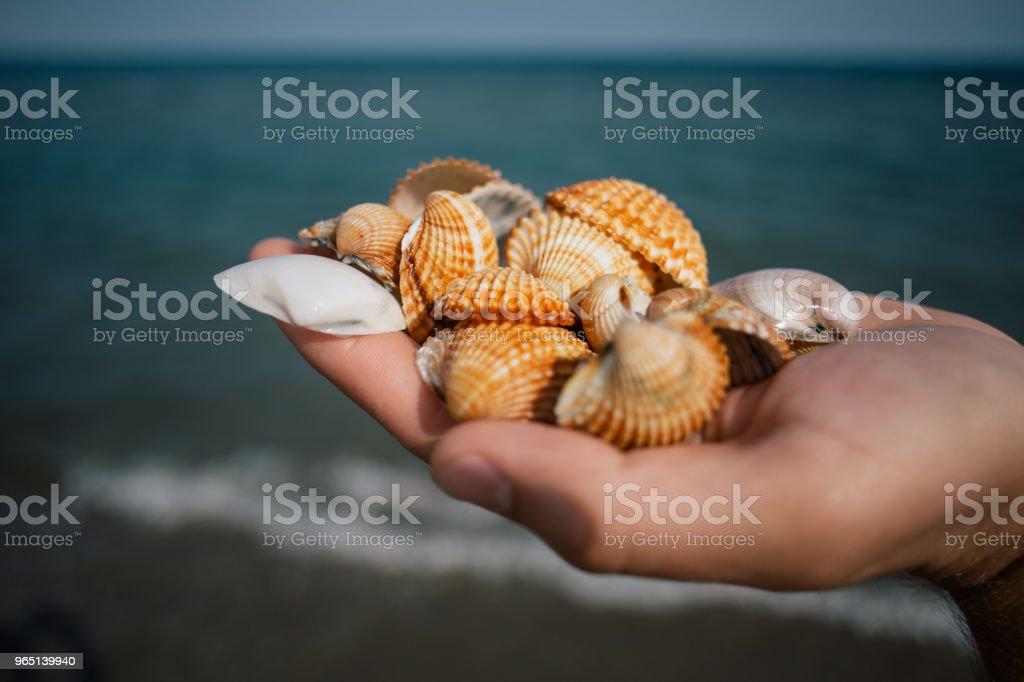 Seashells in the hands, adriatic sea Italia coast apulia zbiór zdjęć royalty-free