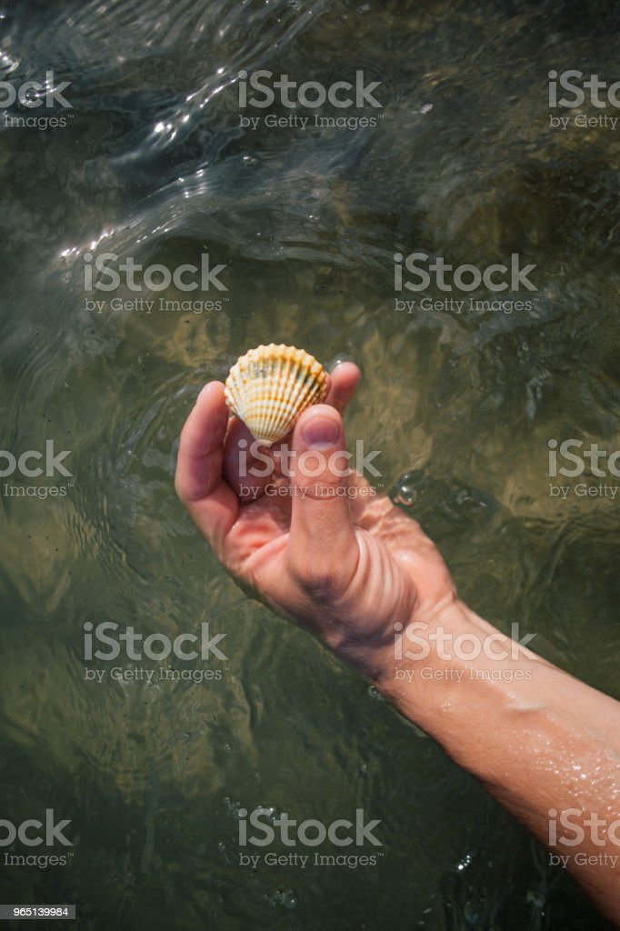 Seashells in the hands, adriatic sea Italia coast apulia royalty-free stock photo