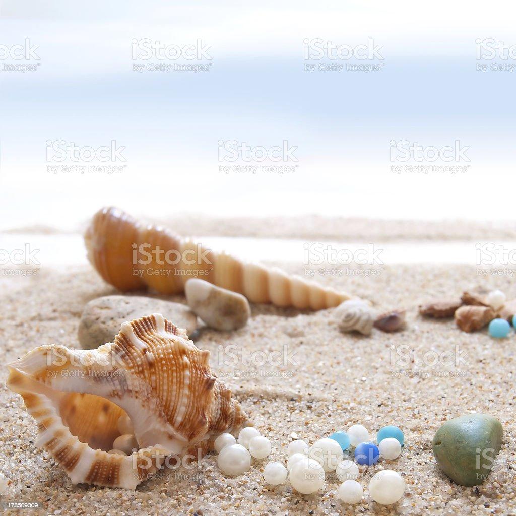Seashells on a beach stock photo