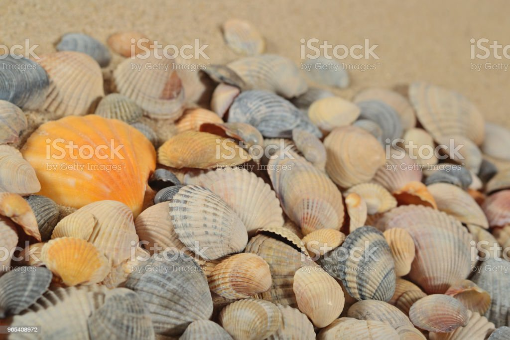 Seashells on a sand background zbiór zdjęć royalty-free