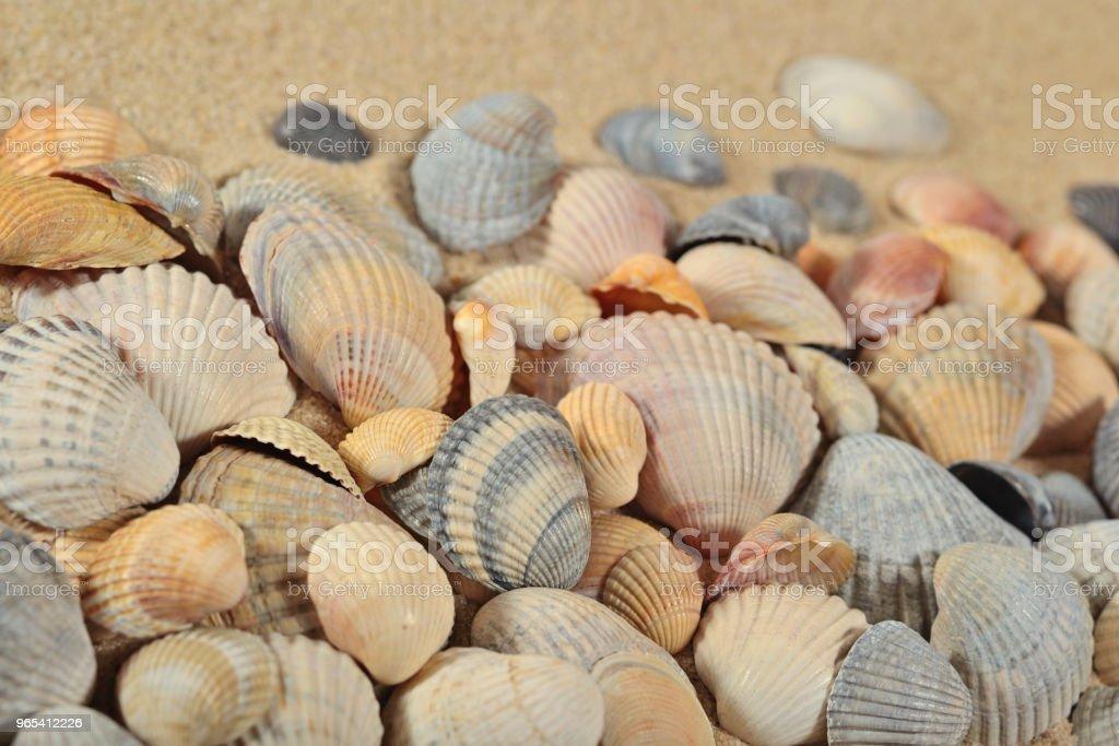 Seashells on a sand background zbiór zdjęć royalty-free