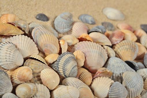 조개에 모래 배경 광물질에 대한 스톡 사진 및 기타 이미지