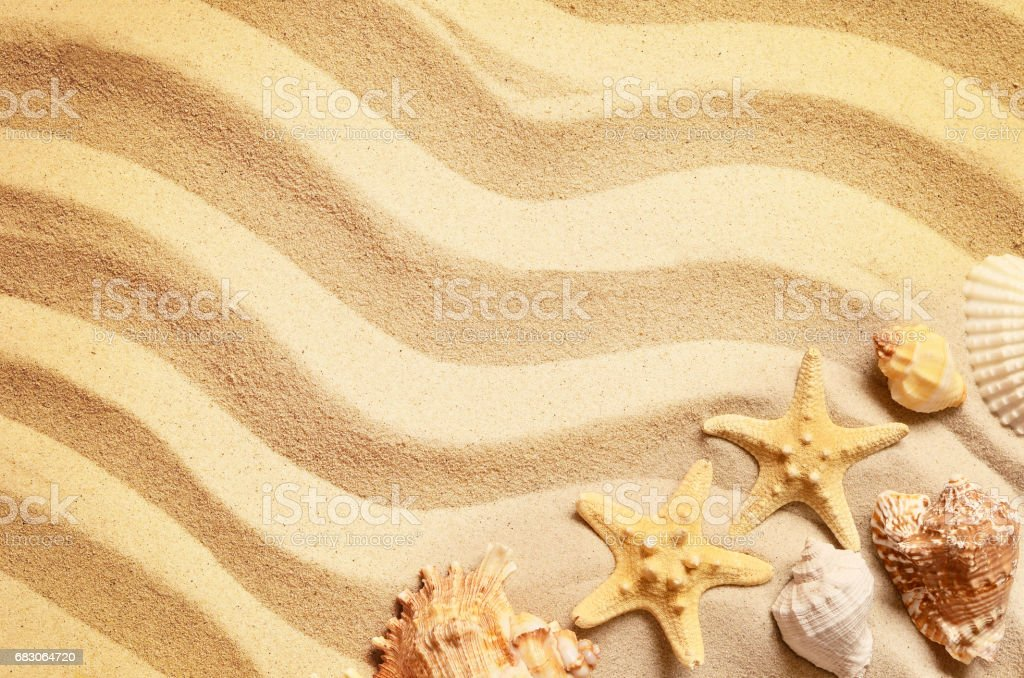 Seashells on a summer beach and sand as background. Sea shells. foto de stock royalty-free
