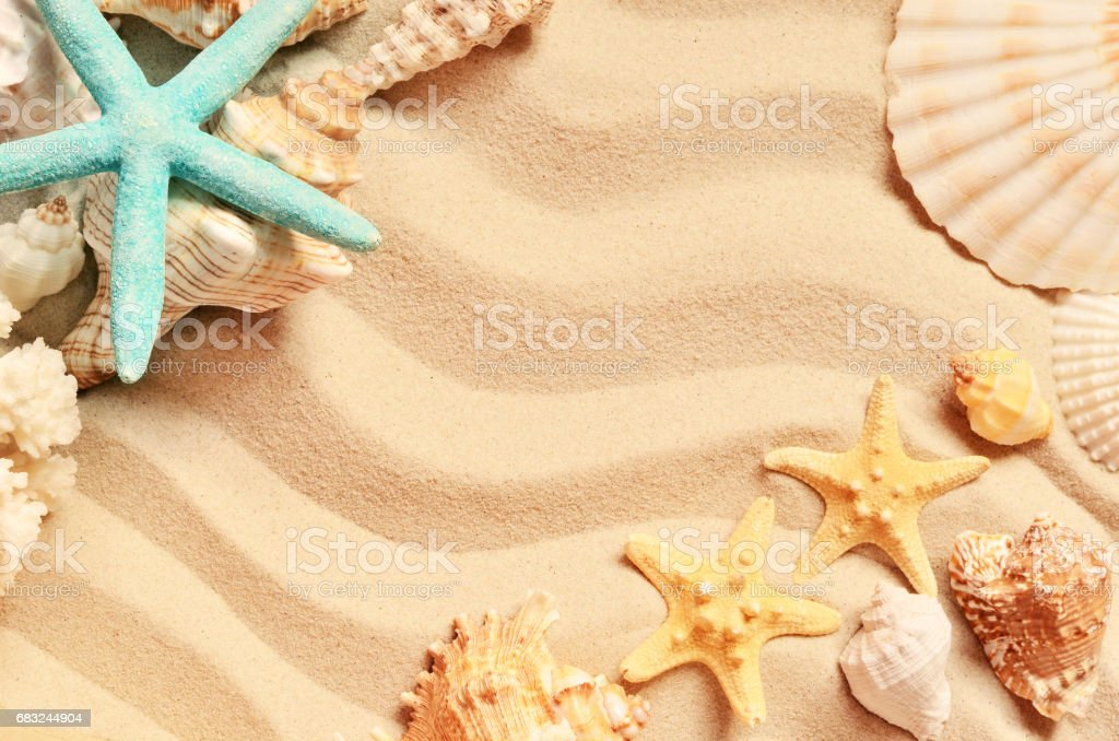 Seashells on a summer beach and sand as background. Sea shells. royalty-free 스톡 사진