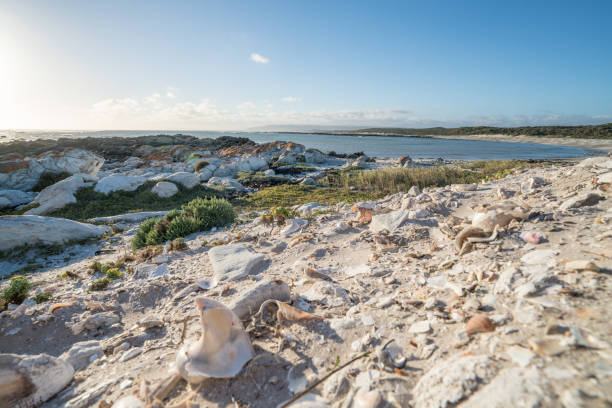 seashells on beach - headland stock pictures, royalty-free photos & images