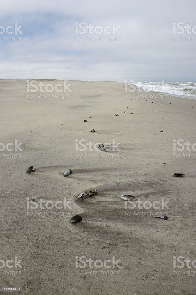 Seashells on Beach stock photo