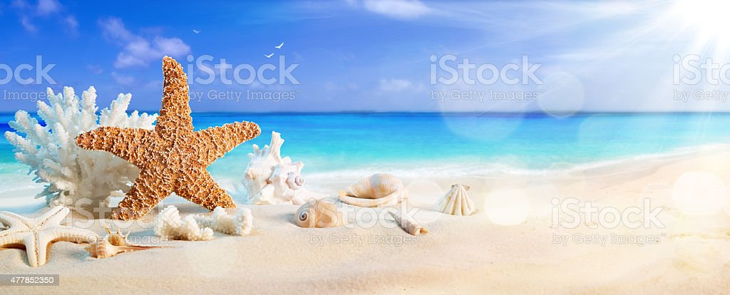 seashells on seashore in tropical beach - summer holiday background stock photo