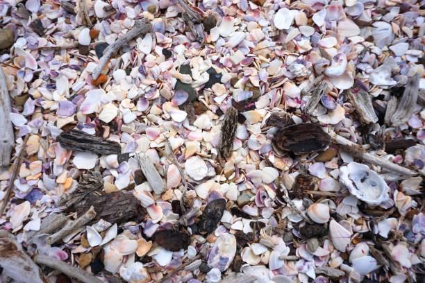 Seashells on the beach stock photo
