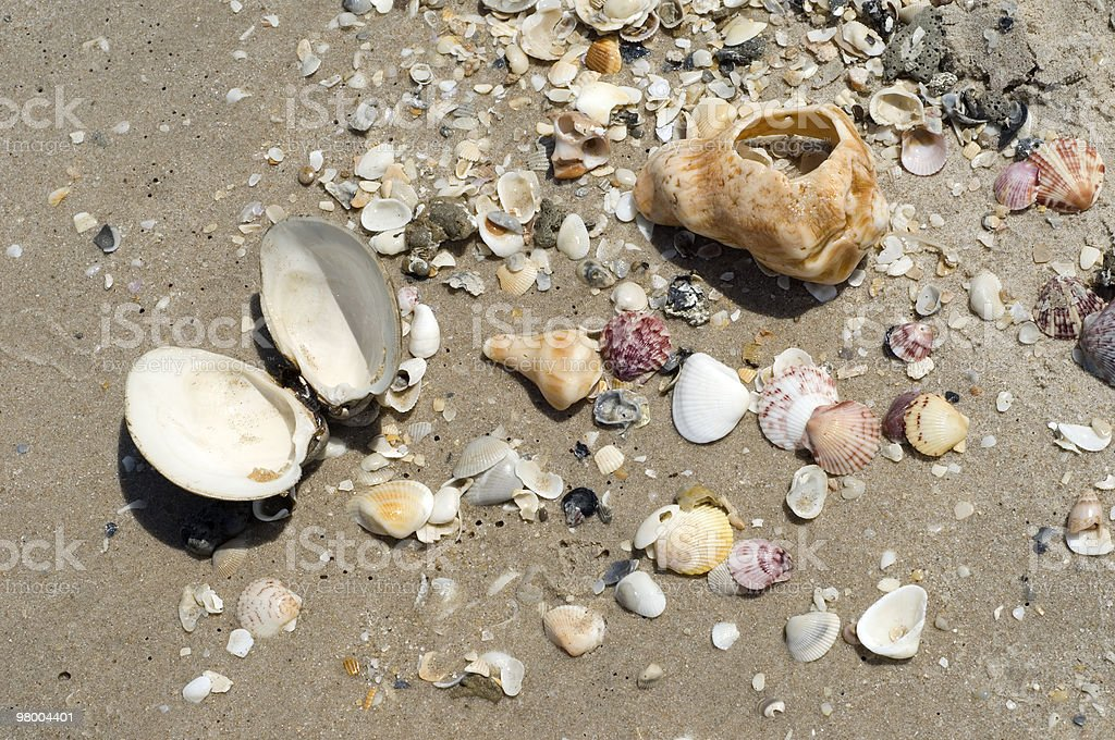 Seashells on the Beach royalty-free stock photo