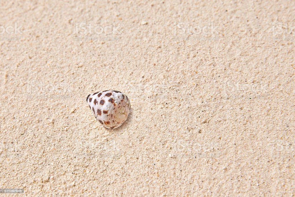 Seashells on the sand in a tropical island, Maldives. stock photo