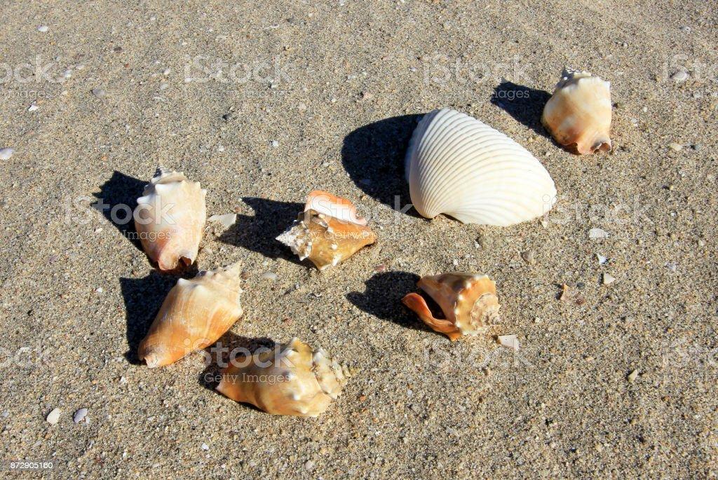 Seashells on the sand of a beach, Baja California stock photo