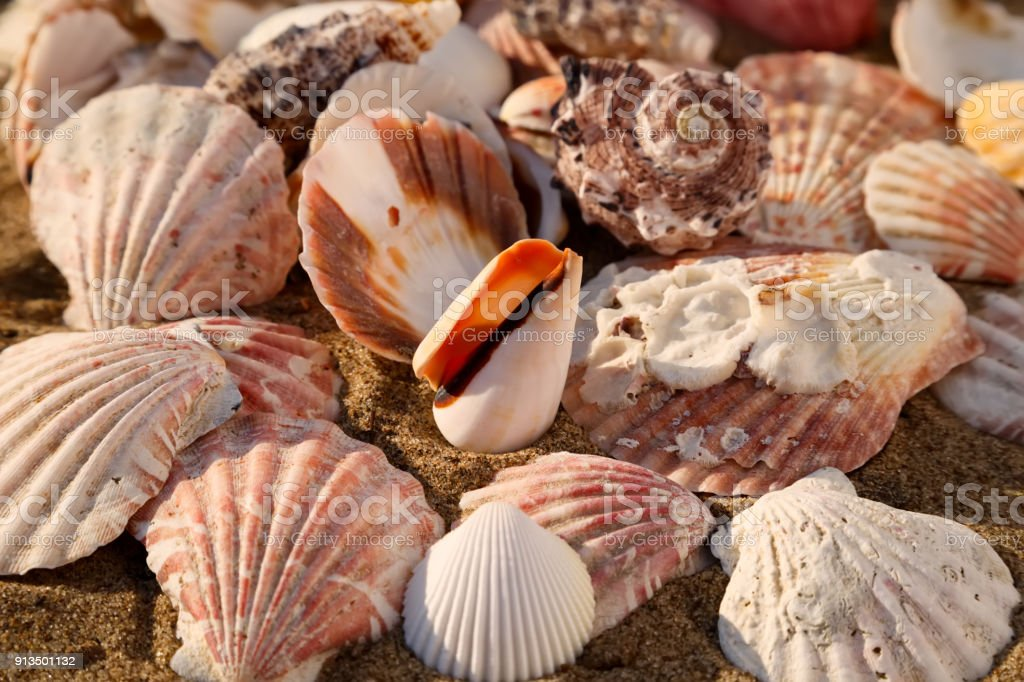 Seashells on the sand stock photo