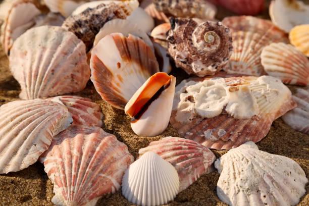 Seashells on the sand stock photo