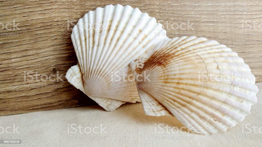 Seashells on the wooden textile background - Royalty-free Amêijoa - Animal Foto de stock