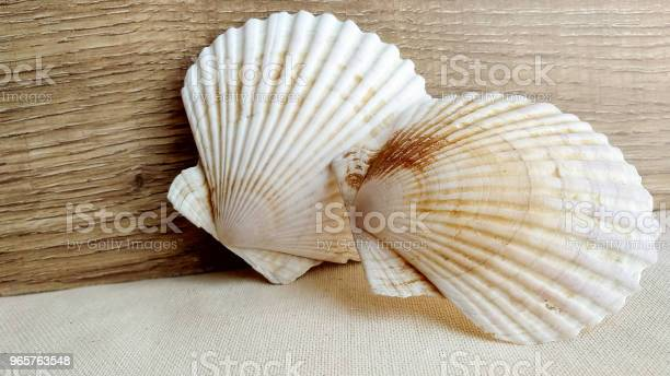 Seashells On The Wooden Textile Background - Fotografias de stock e mais imagens de Amêijoa - Animal