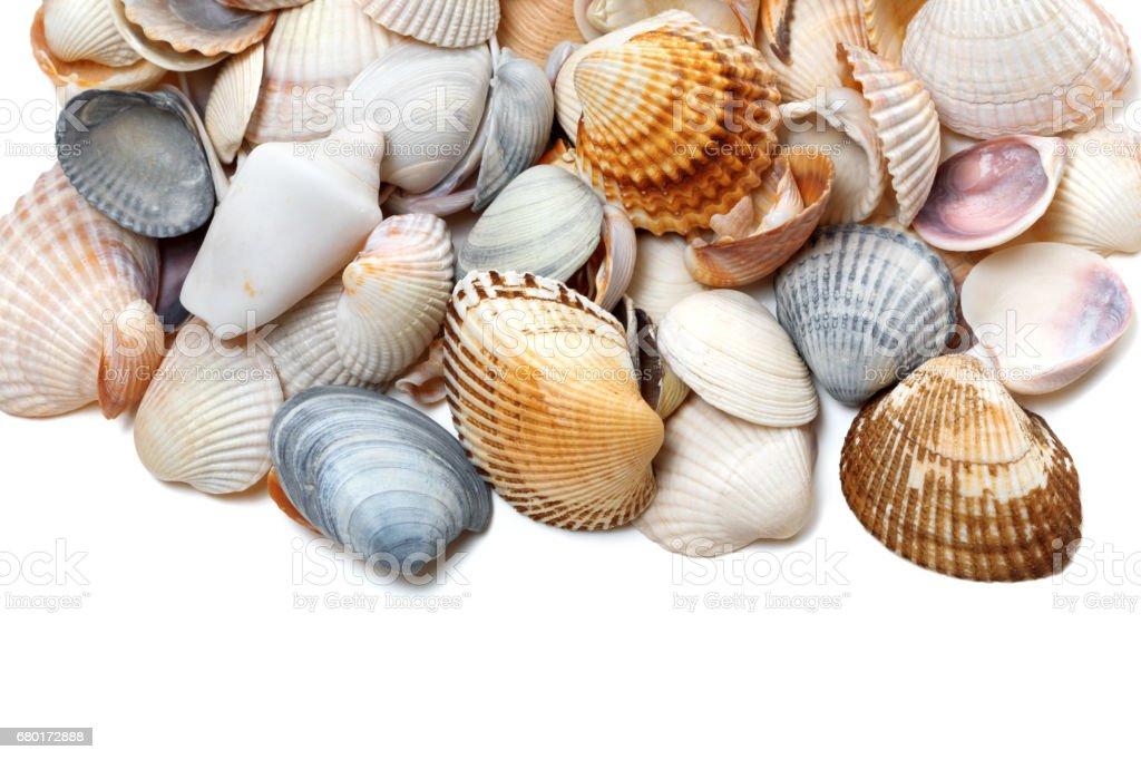 Seashells on white stock photo