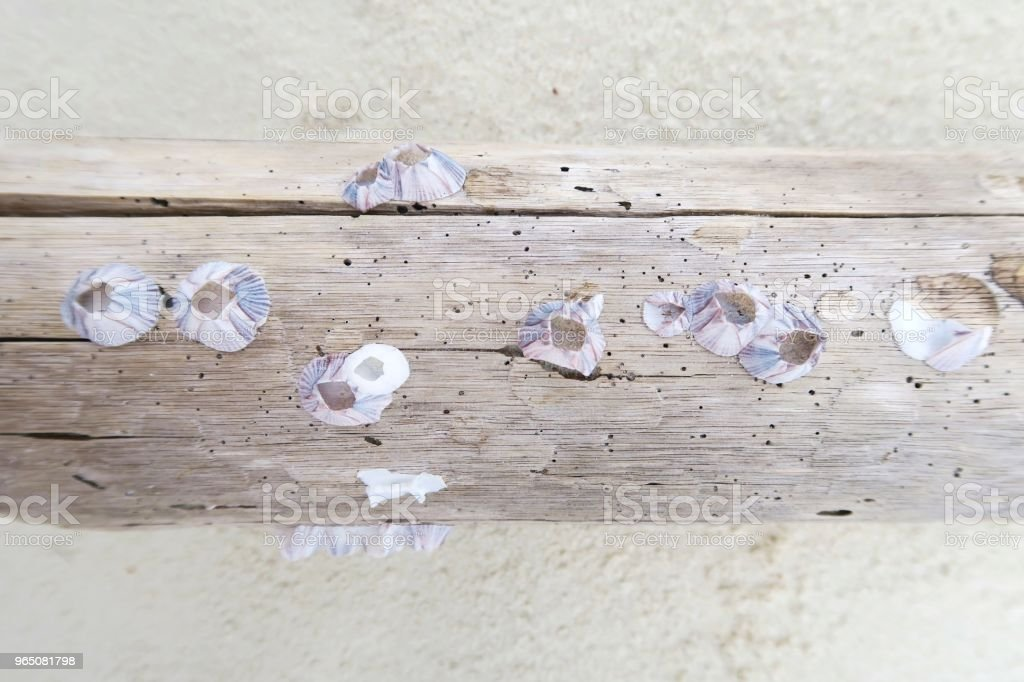 Seashells on wood / beach royalty-free stock photo