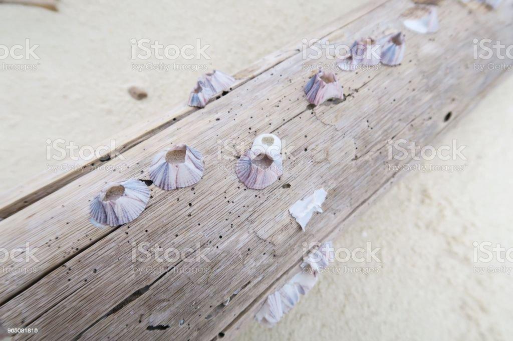 Seashells on wood / beach zbiór zdjęć royalty-free